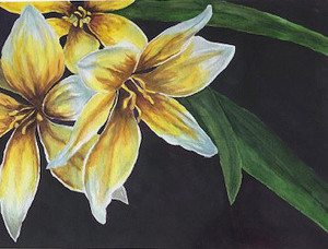 Charm Tulips, D Cunningham